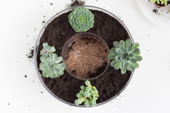 Adventskranz selber machen mit Sukkulenten gepflanzt in Glasschalen