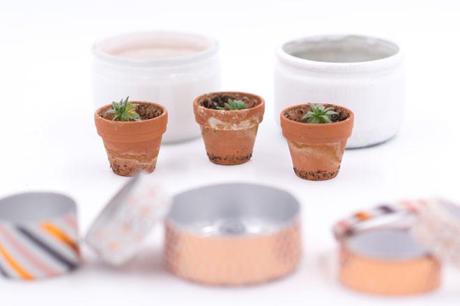 Minigarten basteln mit Teelichtern, Nachgezogene Sukkulenten in Tontöpfen