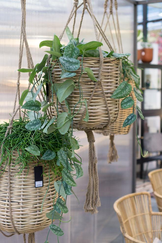 urban jungle trend f rs zuhause pflanzen deko von der. Black Bedroom Furniture Sets. Home Design Ideas
