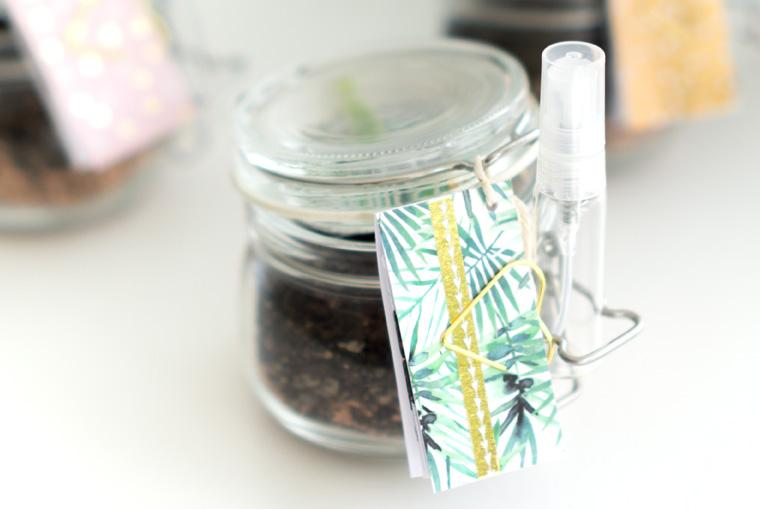 Mitbringsel selbstgemacht: fertig verpackte Sukkulenten Blattstecklinge to go