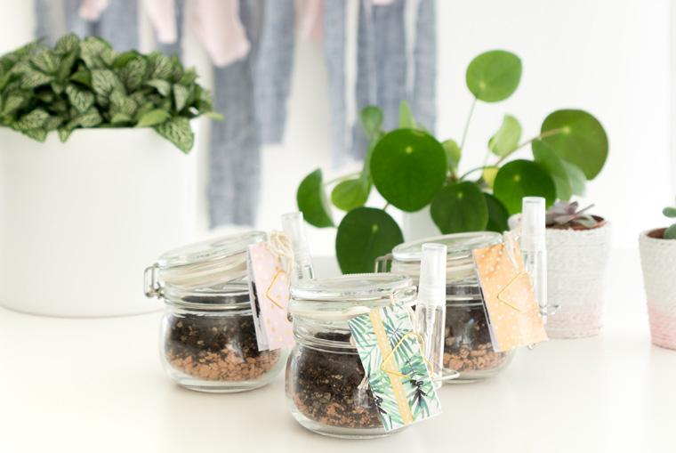 Mitbringsel selbstgemacht einfach schön mit kleinen Blattstecklingen für Sukkulenten im Einweckglas