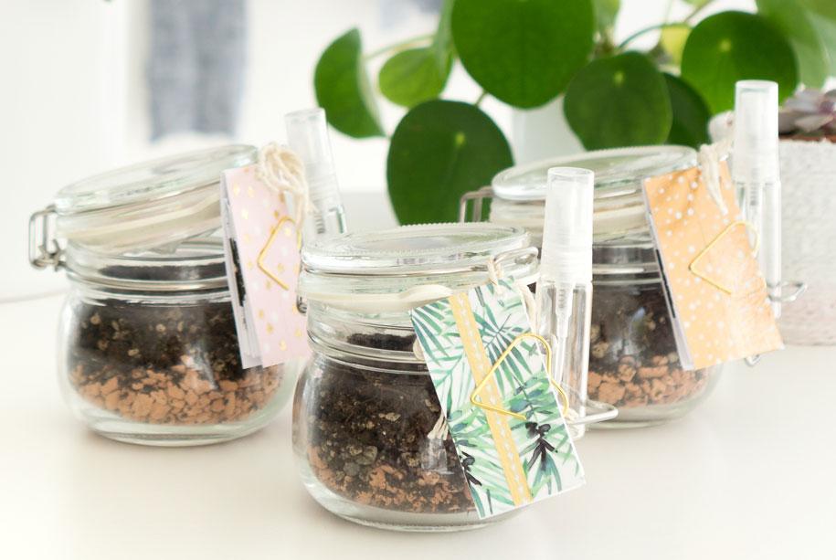 Mitbringsel selbstgemacht Blattstecklinge Sukkulenten mit Vorlage