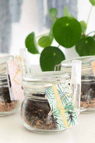 DIY | Mitbringsel selbstgemacht: Sukkulenten Blattstecklinge to go