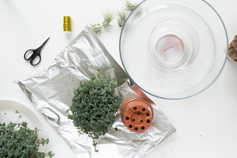Grünpflanzen für den Adventskranz aus den Plastikübertöpfen nehmen