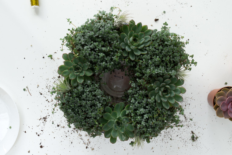 Bepflanzter Adventskranz