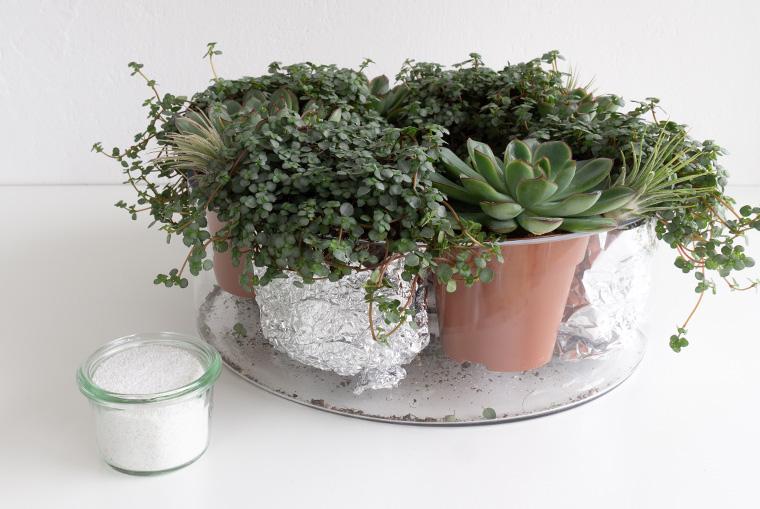 Bepflanzter Adventskranz in Glasschalen