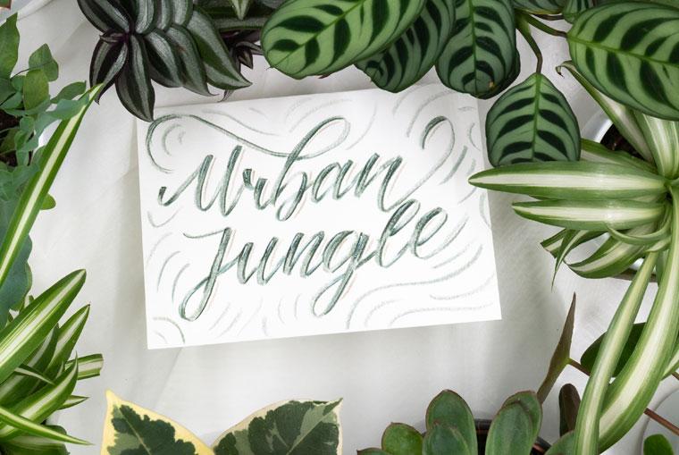 Urban Jungle Handlettering und Calathea, Grünlilien, Sukkulenten